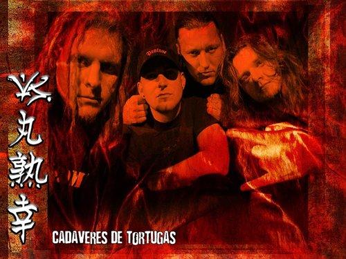 CADAVERES DE TORTUGAS picture