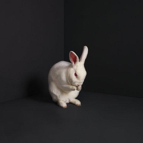 BRUME - Rabbits cover
