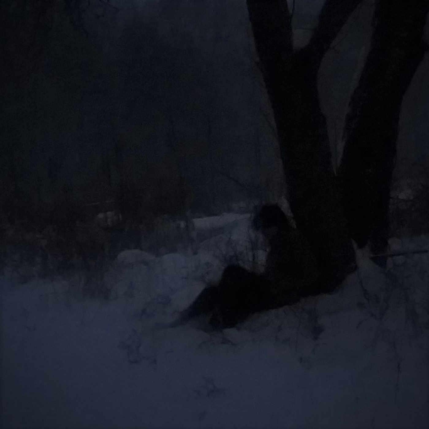 DZÖ-NGA - Upon the Shimmered Bough cover