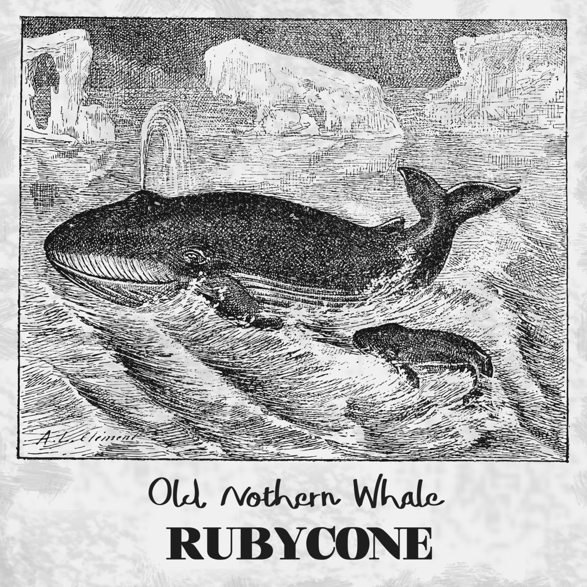 RUBYCONE - Old Nothern Whale cover