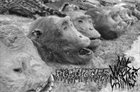 AGATHOCLES Agathocles / My War Crimes album cover