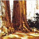 CONIFER Conifer album cover