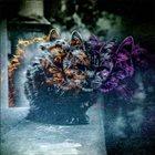 DESIDIA Uroboros / Asilo / Desidia album cover