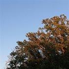 NJIQAHDDA A Tree Fed Blood album cover