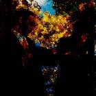 NJIQAHDDA Discography IV album cover