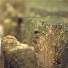 NJIQAHDDA Grain I album cover