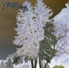 NJIQAHDDA Sovenstraa album cover