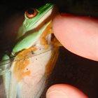 PHYLLOMEDUSA Amphibians Vs Reptiles album cover