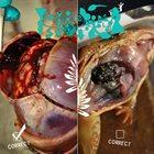 PHYLLOMEDUSA Correct Dissect album cover