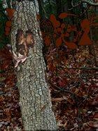 PHYLLOMEDUSA Grostunde Slouch Mound album cover