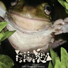 PHYLLOMEDUSA Inept Breviceps Amplex album cover