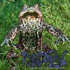 PHYLLOMEDUSA Inguinal Recency A Ologn Viren Mirth album cover