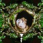 PHYLLOMEDUSA Non-Melodic Trills Of Rattling Quality Seldom album cover