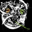 PHYLLOMEDUSA Pdri album cover