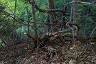 PHYLLOMEDUSA Somnolent Metacarpus album cover