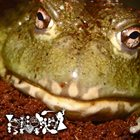 PHYLLOMEDUSA Untitled Frog Worship album cover