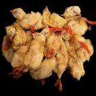 QUITTERS Chicken album cover