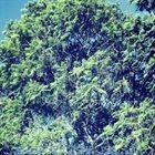 Q'UQ'UMATZ I Know It's The Trees... album cover