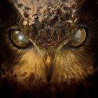 VAK VAK album cover
