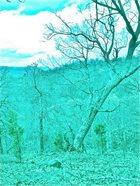 WHEELS WITHIN WHEELS Wheels Within Wheels and Aptrgangr album cover