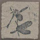 AGAINST NATURE Accumulus album cover