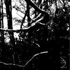 ENCIRCLING SEA Écru album cover
