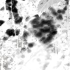 OAKS OF BETHEL Disembodied II album cover