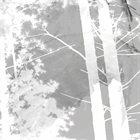 OAKS OF BETHEL Disembodied III album cover