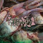 PHYLLOMEDUSA A Most Familiar Tumult album cover