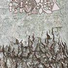 PHYLLOMEDUSA Agroinduced Biophilia album cover
