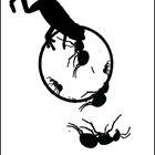 PHYLLOMEDUSA Ant Vs Frog album cover