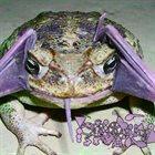 PHYLLOMEDUSA Batglutton album cover