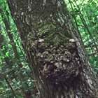 PHYLLOMEDUSA Forest And Fynbos album cover