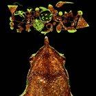 PHYLLOMEDUSA Grim Body Exploration / Rhinoderma Phylogeny album cover