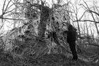 PHYLLOMEDUSA King Void album cover