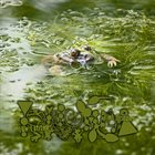 PHYLLOMEDUSA Low Latitudes, High Disdain album cover