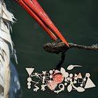 PHYLLOMEDUSA Molesting The Frog Eater (2015) album cover
