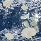 PHYLLOMEDUSA Myco-Glyphos album cover