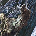 PHYLLOMEDUSA Requign The Soak Up album cover