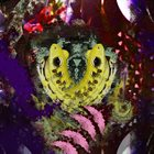 PHYLLOMEDUSA Sightings In January album cover