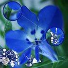 PHYLLOMEDUSA The Blue Meanie (Live; Sleep Show) album cover