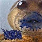 PHYLLOMEDUSA The Frankixalus album cover