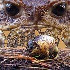 PHYLLOMEDUSA The Margin of Bizarre Elements album cover