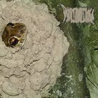 PHYLLOMEDUSA The Mudgician album cover