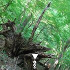 PHYLLOMEDUSA The Vecsh album cover