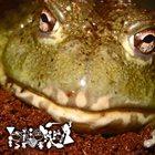 PHYLLOMEDUSA Untitled Frog Worship album cover