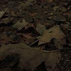 PHYLLOMEDUSA Vanishing Act album cover