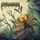 PINEWALKER Migration album cover