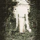 SALLOW MOTH Moss Deceptiva album cover