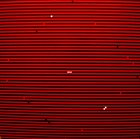 SWANS Swans album cover